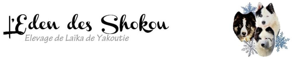 Elevage de Laïka de Yakoutie – L'Eden des Shokou